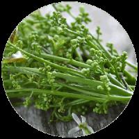 Neem - pianta