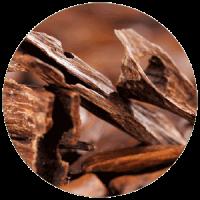 Sandalo - pianta